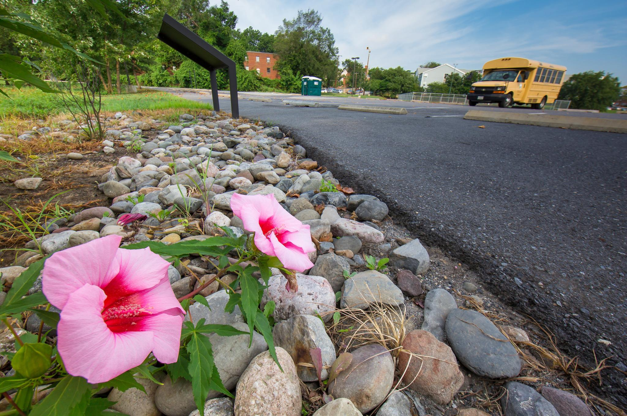 Rain gardens like this help keep toxic runoff from parking lots from entering the river system.